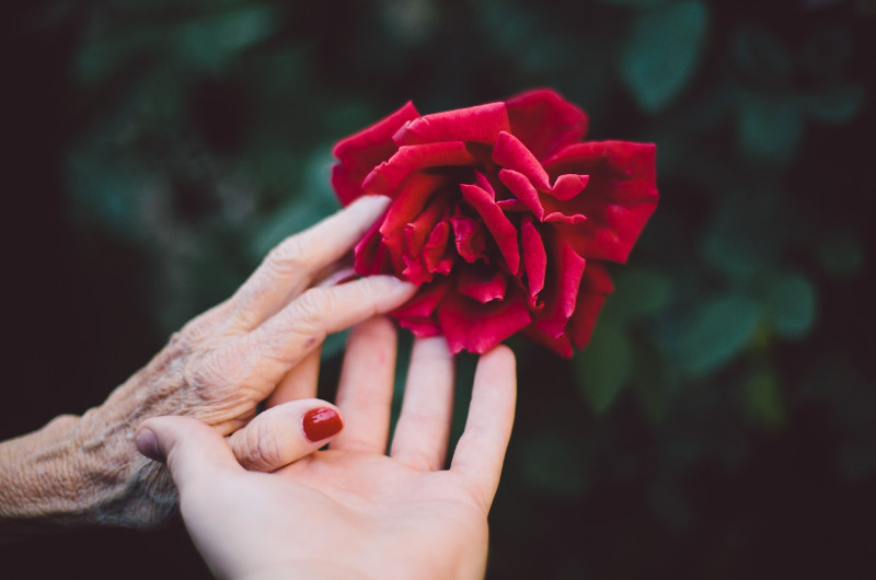 hands-with-rose-800px